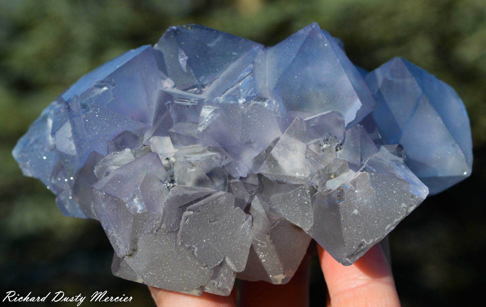 Fluorite (Fluorine) from Naica, Chihuahua, Mexico (size: Cabinet)