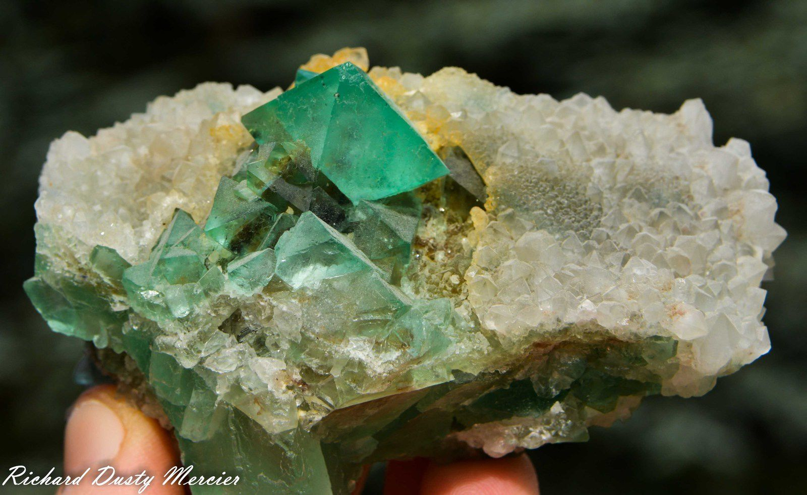 Fluorite (Fluorine) octahedron (Octoédre) on Quartz from Riemvasmaak, South Africa