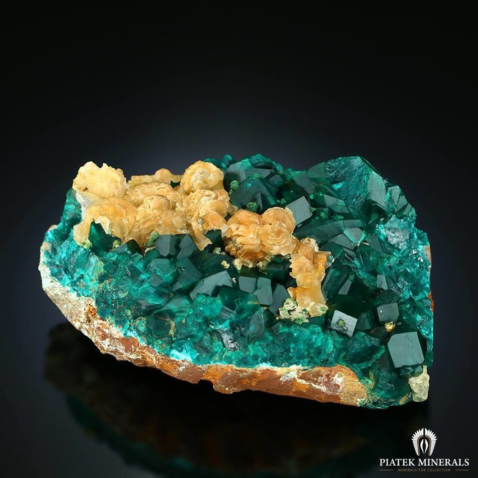 Dioptase (specimen and photo by Piatek Minerals)