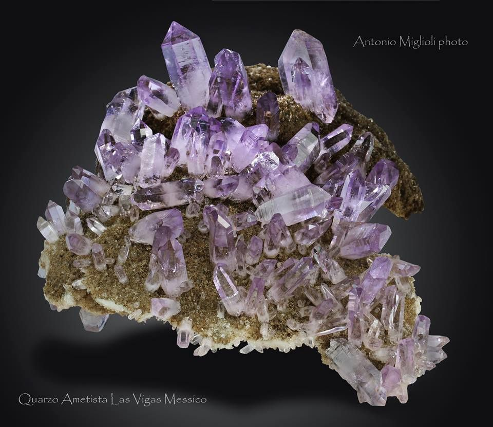 Amethyst from Veracruz, Mexico (specimen and photo by Antonio Miglioli)