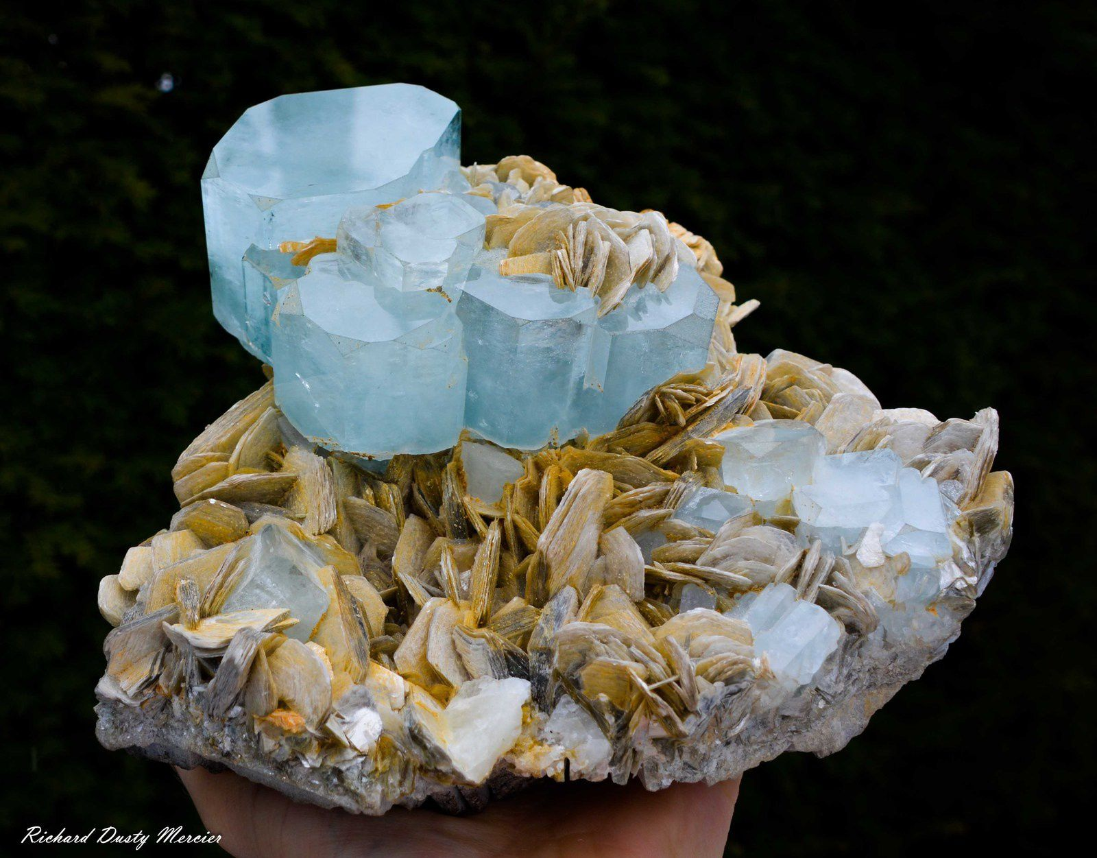 Aquamarine on Muscovite from Pakistan (Specimen and Photo: Richard Dusty Mercier)