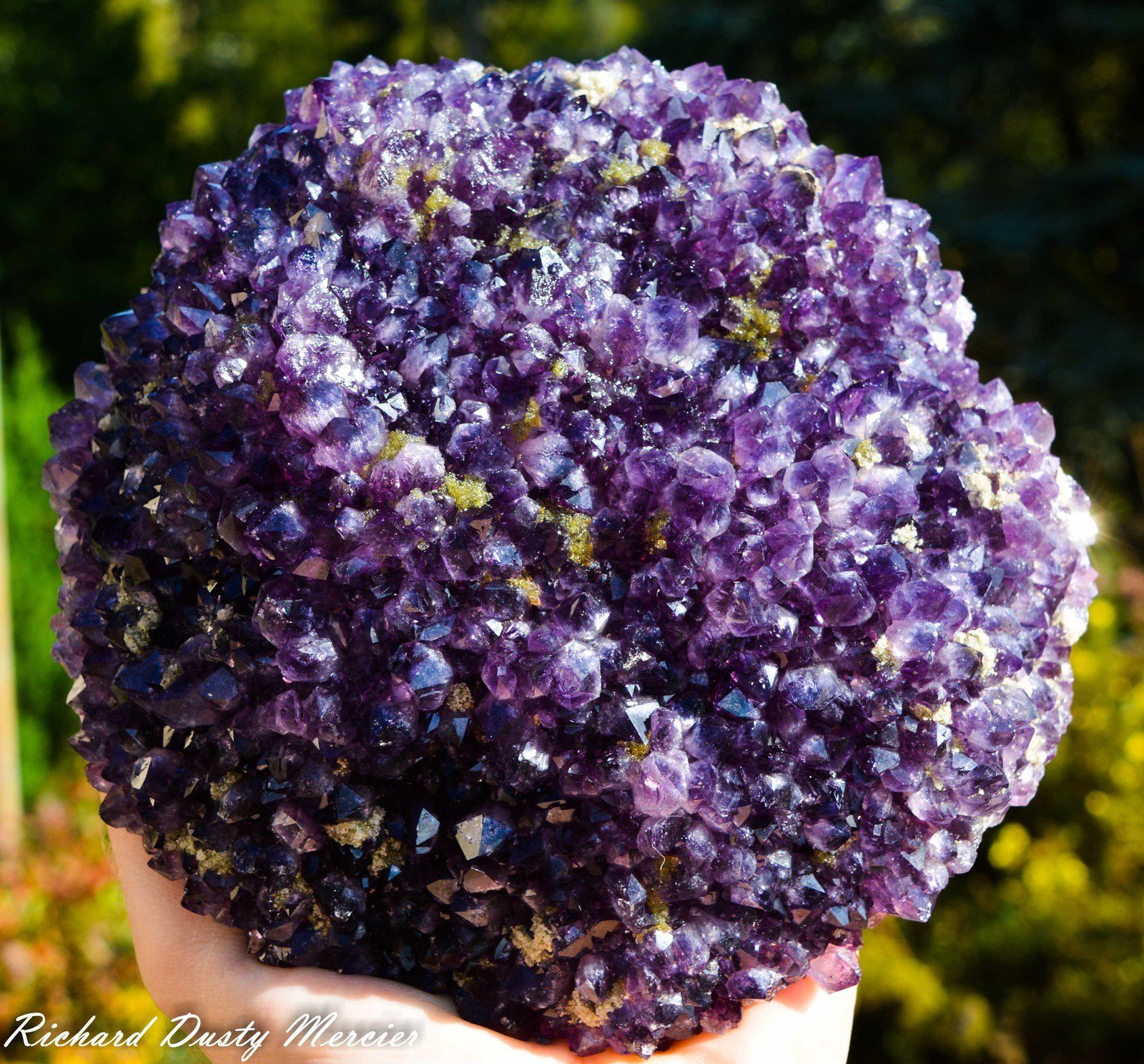 Amethyst Flower from Uruguay (Specimen and Photo: Richard Dusty Mercier)