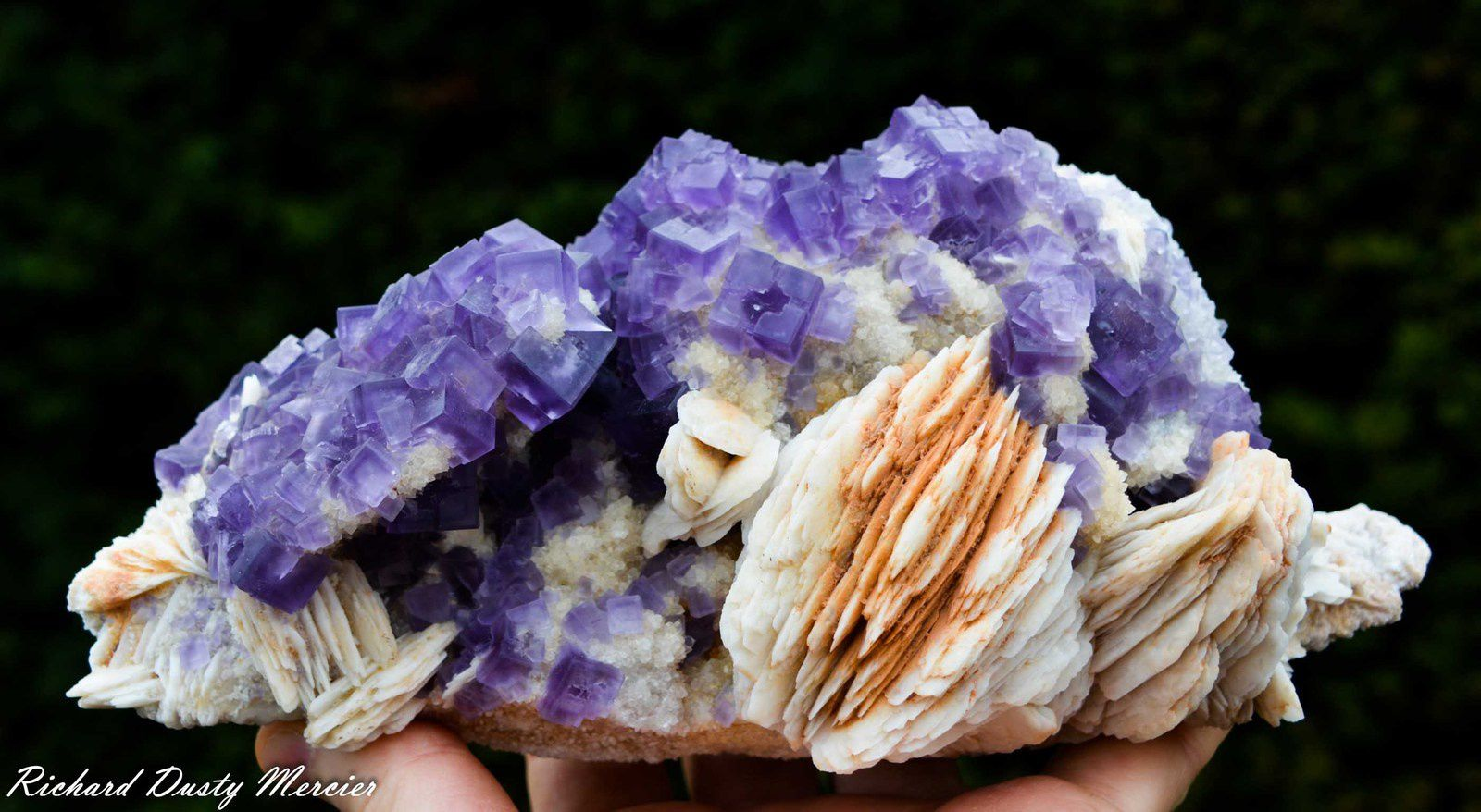 Fluorite with Barite from Berbes, Spain (Specimen and Photo: Richard Dusty Mercier)