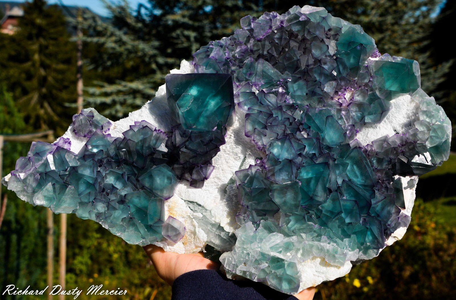 Fluorite from De'An Mine, China (Specimen and Photo: Richard Dusty Mercier)