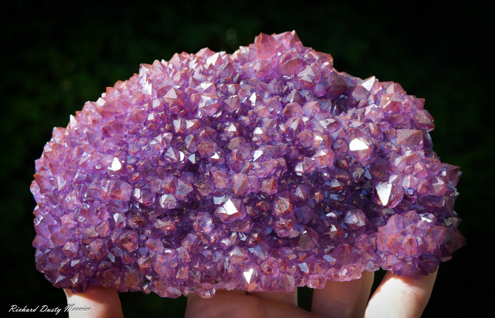 Amethyst flower from Canada (Specimen and Photo: Richard Dusty Mercier)