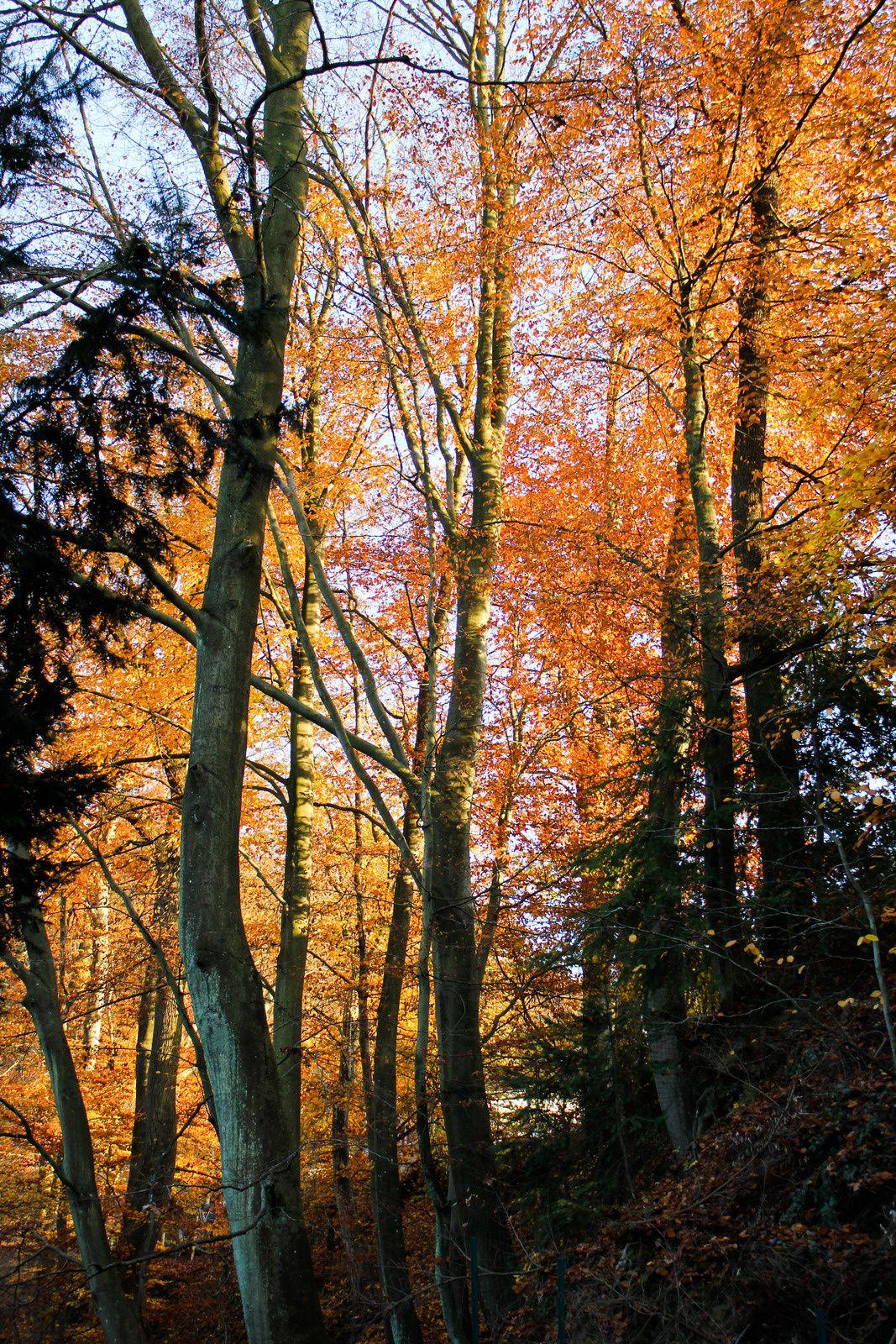 Envie d'une Forêt Noire ?