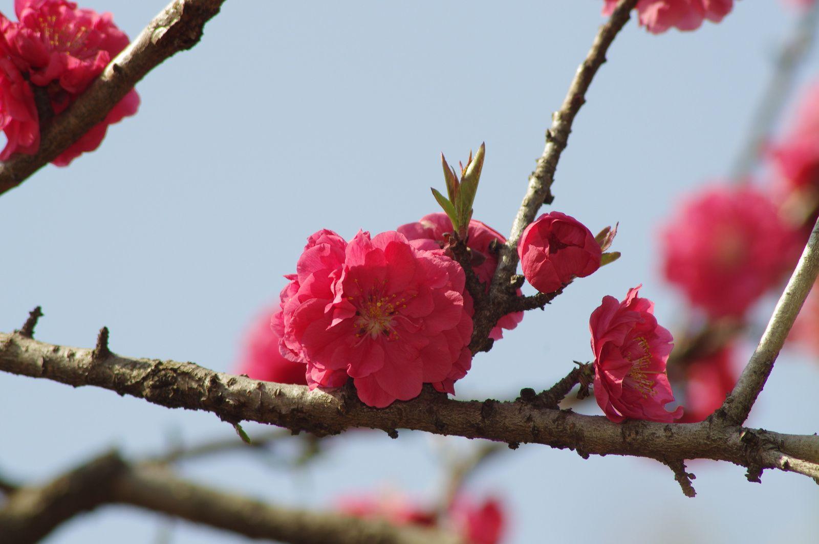 fleurs de mars 2014