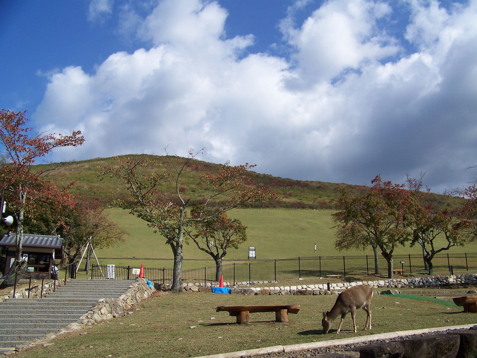 Nara (numéro 29) en 2011