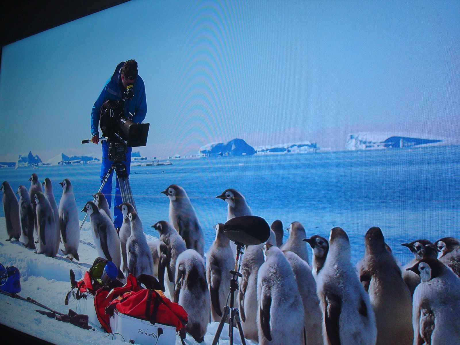 Moi ce  qui m'a intéressé au  musée c'est  le film  ou les photographes prennent des  photos  des   pingouins. Christopher
