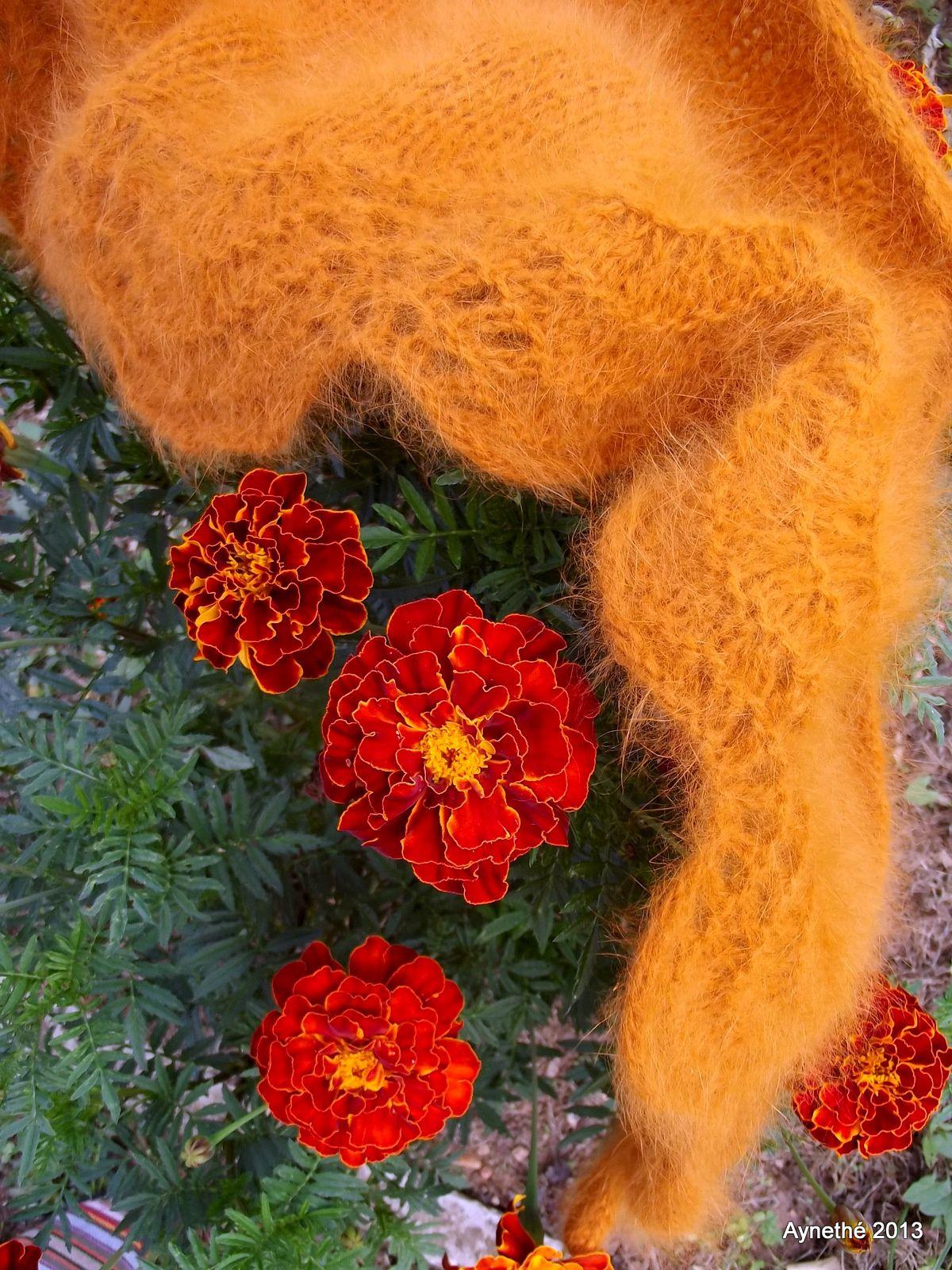 Harmonie de couleurs d'automne.