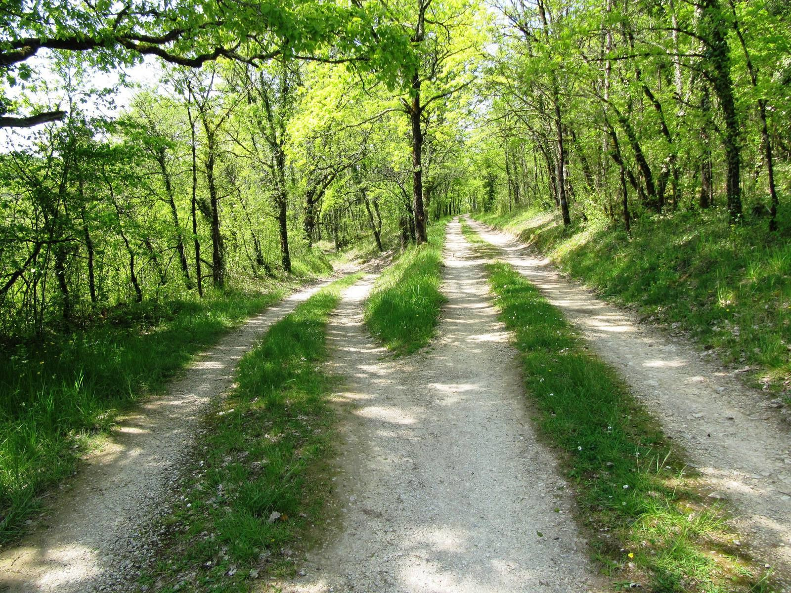 Chemin du retour ombragé