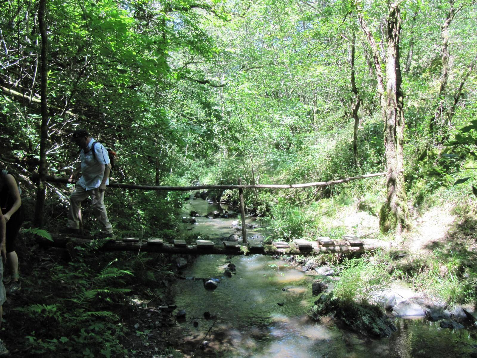 Traversée de la forêt de Montcheyrol au cœur de laquelle coule la Tourmente. Passages difficiles.