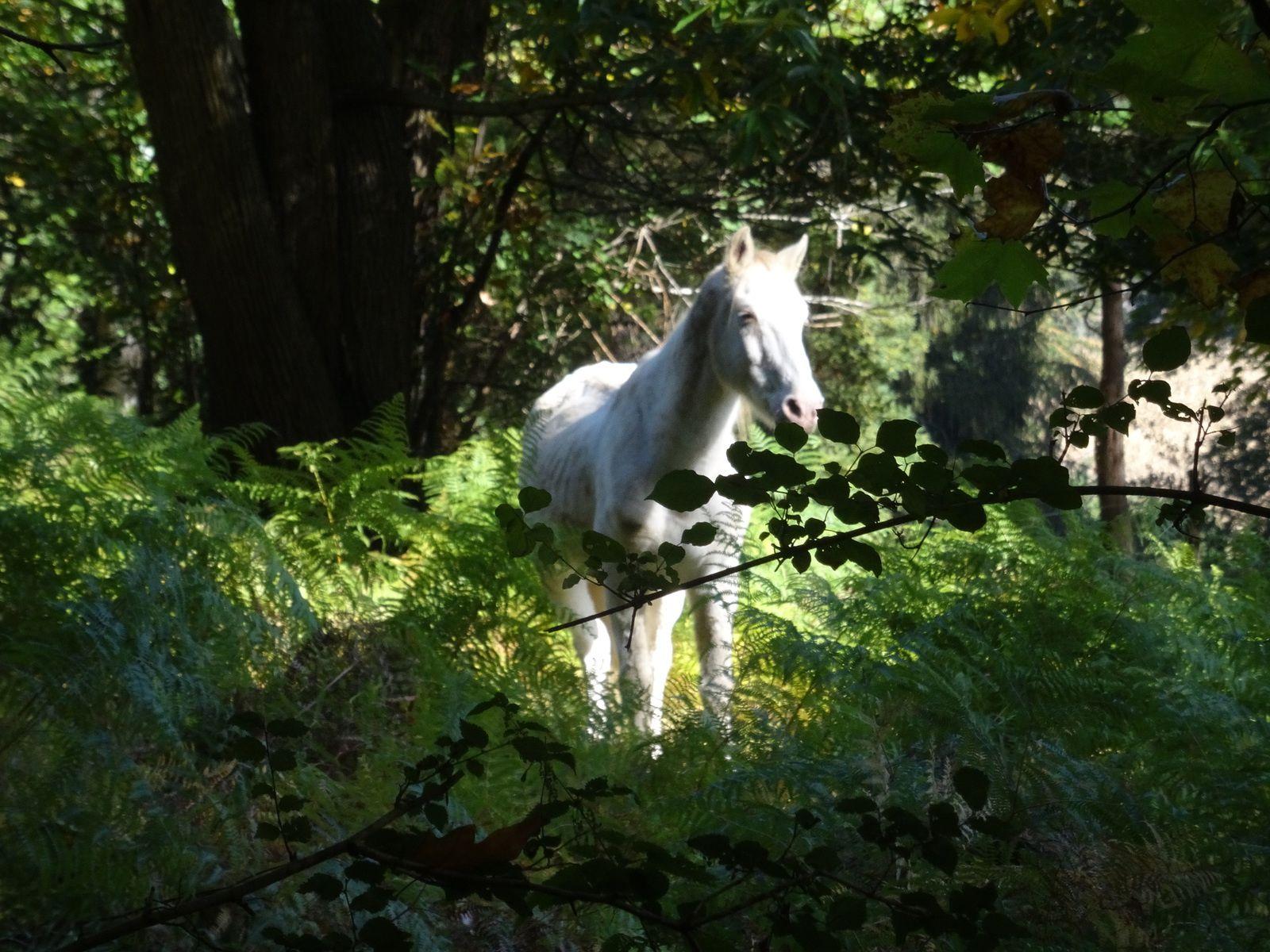 ET ce n'est pas l'intervention du cheval de l'apocalypse ou du cheval blanc d'HENRI IV qui y changera quelquechose, le randonneur corrézien est tout d'abord un consommateur... de châtaignes, de mures, de champignons, de figues...  bref c'est l'EDEN !