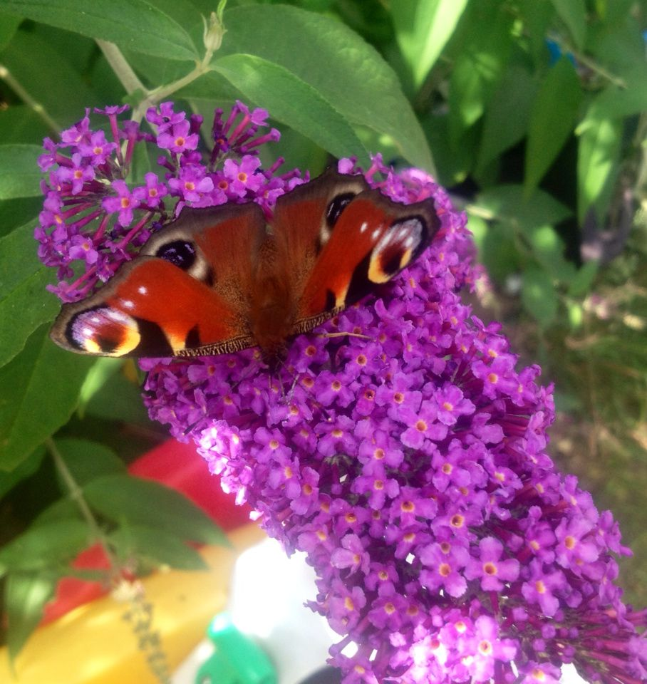 """Butterflies and Blueberries """"How Does Your Garden Grow?"""""""