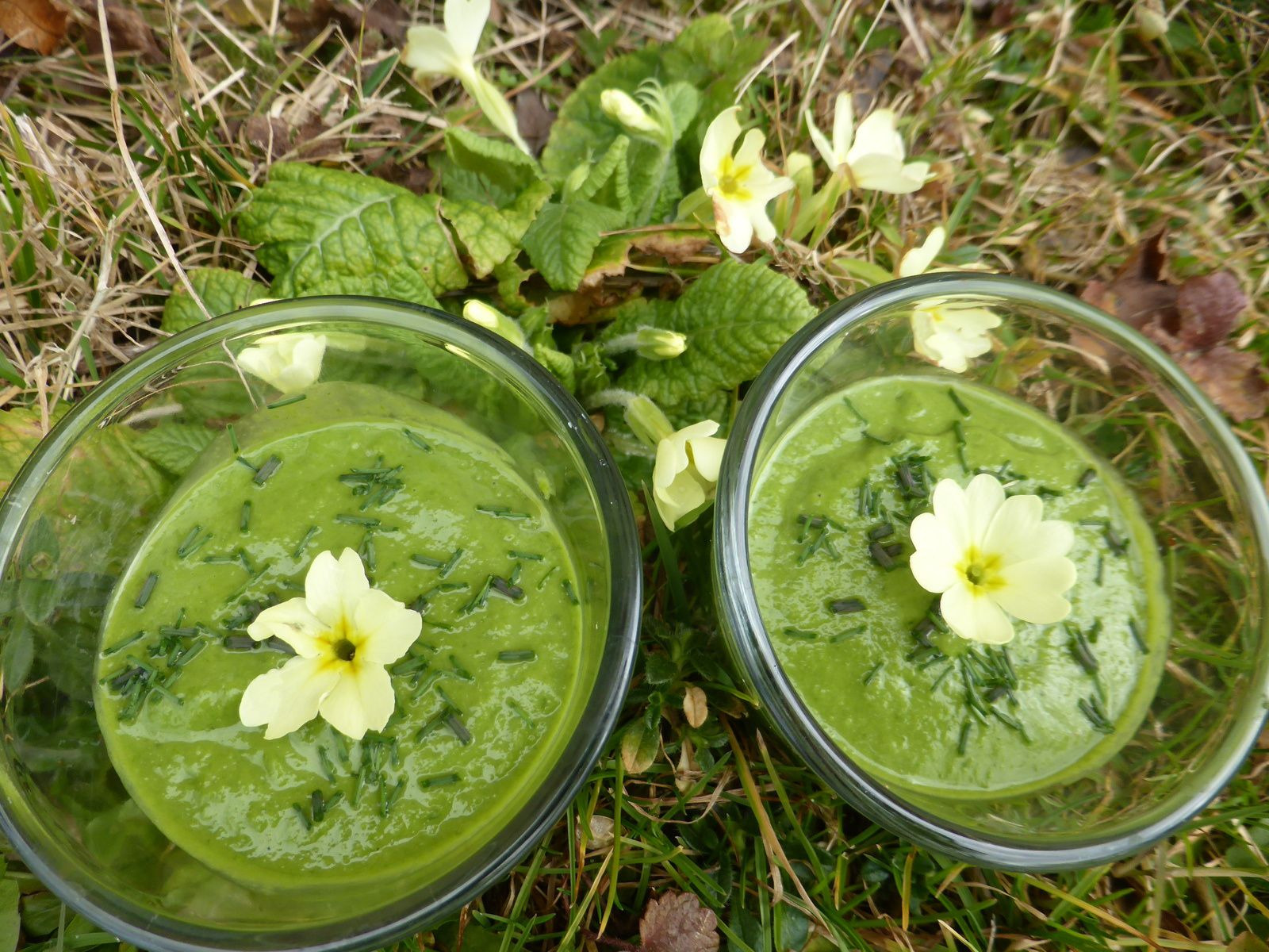 PLANTES SAUVAGES &amp&#x3B; SMOOTHIE