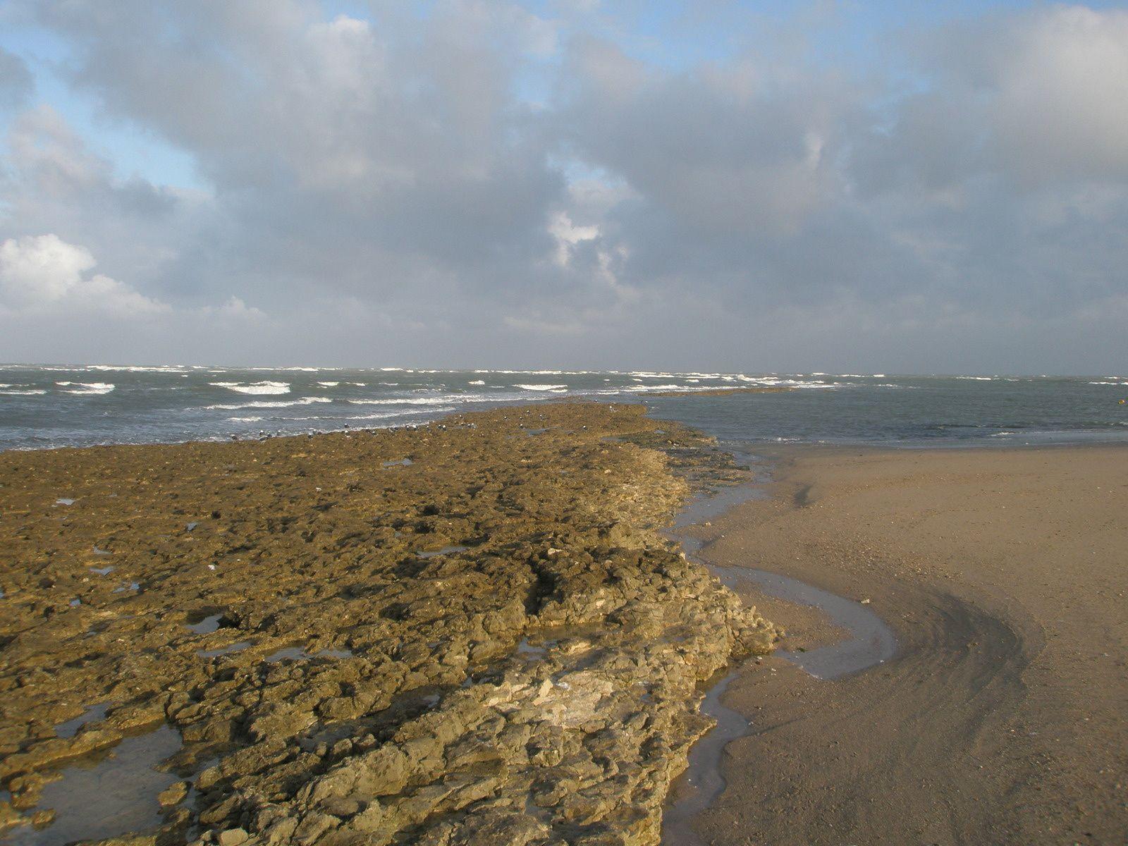 La musique des vagues sur les plages de l'île d'Oleron est pareille qu'au bord des lagunes du Cénomanien, lorsque les morceaux de lignite que la mer dépose aujourd'hui sur le sable étaient des grands arbres tropicaux, Araucarias, Gingkos, que berçait le vent du Crétacé supérieur...