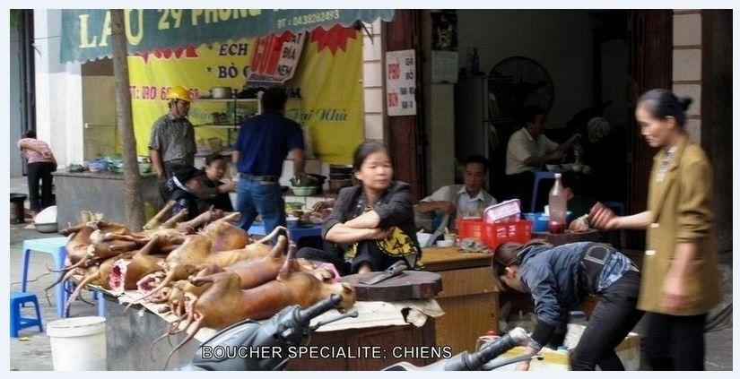 Boucherie servant du chien rôti (Vietnam). Source: Le voyage de Lady Anne (blog de navigateurs autour du monde)