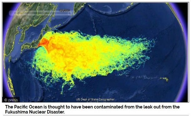Source: http://www.neonnettle.com/features/448-officials-fukushima-has-now-contaminated-1-3-of-the-worlds-oceans