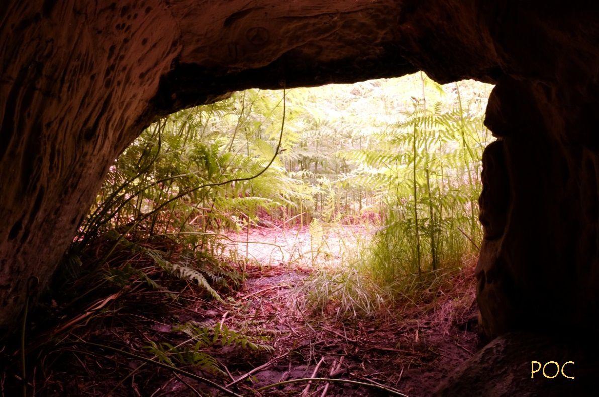 Une grotte ornée du Mésolithique perdue dans la  forêt ...