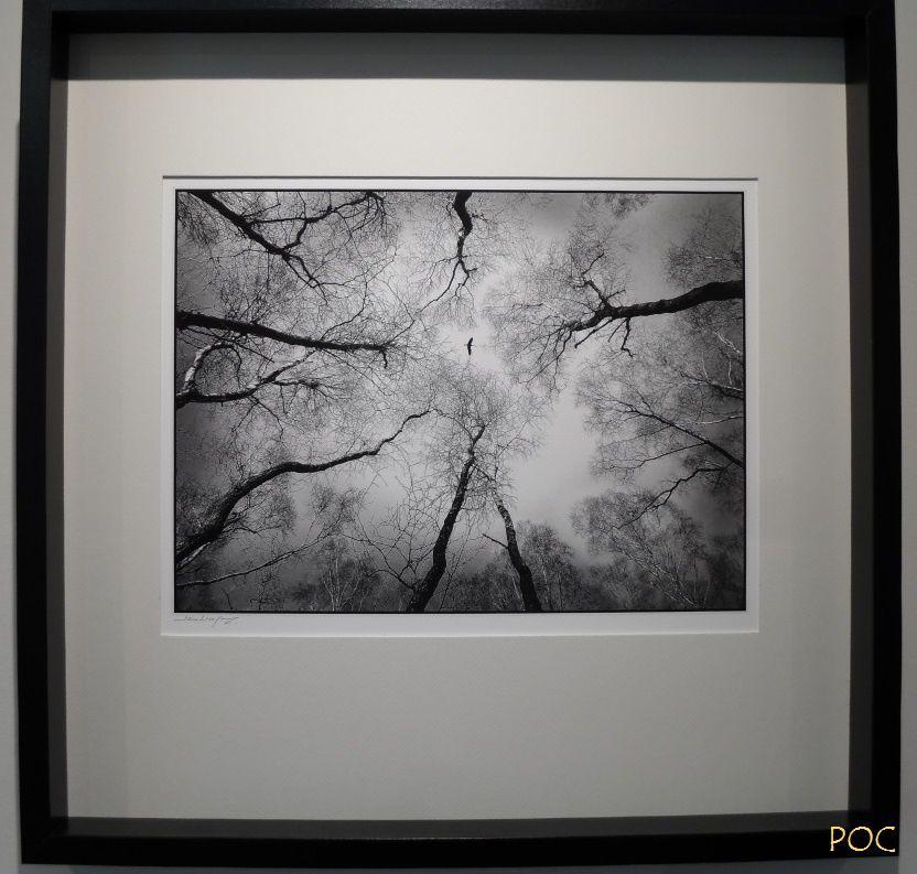 Un vol de grues survole la forêt. Le photographe Jean-Claude Bugny était là, avec sa vision singulière en noir et blanc. Comme la couleur est omniprésente dans la nature et que tous les animaux ou presque voient en couleur, chacun à sa manière, Jean-Claude Bugny est-il achromate ? Pour plus d'informations: https://fr.wikipedia.org/wiki/Achromatopsie