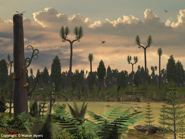 Carboniferous riverbank.  Ferns, seed ferns, and giant lycopods (primitive moss-like plants with long slender leaves) flourished during the Carboniferous period, from about 360 to 300 million years ago. Some lycopods, such as the arboreal genus Sigillaria illustrated here, grew as high as 130 feet. (100 feet is considered tall for a modern Maple tree). Other tree-like plants included many varieties of arborescent horsetail of the genus Calamites and genus Asterophyllites.  While the first dinosaurs were not to appear for another 130 million years, the Carboniferous forests were home to a plethora of terrestrial animals, including many species of invertebrates and some of the first walking vertebrates, including amphibians resembling modern salamanders. It was the insects however, many of them giants, that dominated the landscape. There were dragonfly-like Meganeura with wingspans up to 30 inches, giant centipedes roamed the forest floor, and some scorpions were over 20 inches long. Walter Myers: http://www.arcadiastreet.com/cgvistas/earth/02_paleozoic/earth_02_paleozoic_6200.htm