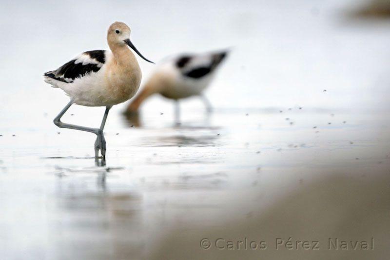 L'image du mercredi : Carlos Perez Naval, jeune photographe nature de l'année