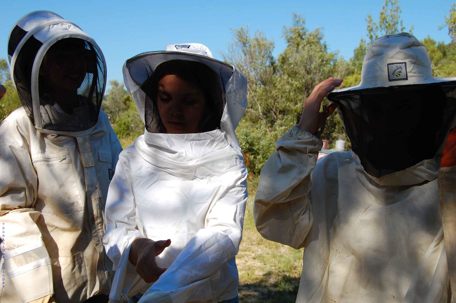 Theme 2 : Beekeeping over the time, the ethnobiologic aspects and particularly on the intergenerational transmission of knowledge / Ethnobiologie et transmission intergénérationnelle de l'apiculture / Béryl Coulombié, Akim Pavageau, Zoé Terrapon, Fanny Mokhnachi, Mathilde Levy-Backes, Lola Werquin