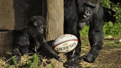 EXPO photo 2014 : Rugby pour Tous