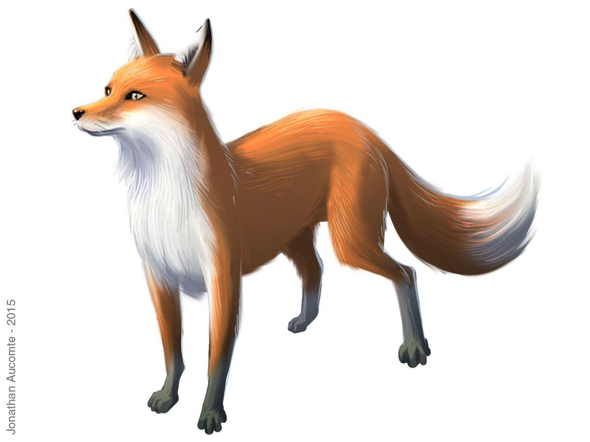 Et les animaux totem: l'aigle, le cheval, le loup et le renard