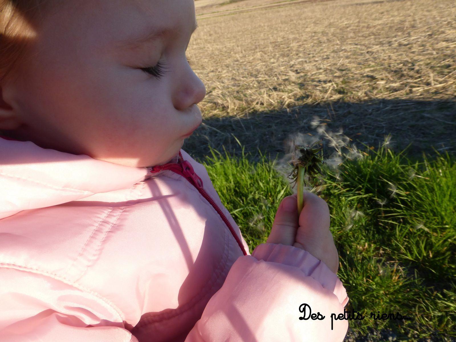 Une fleur de pissenlit...