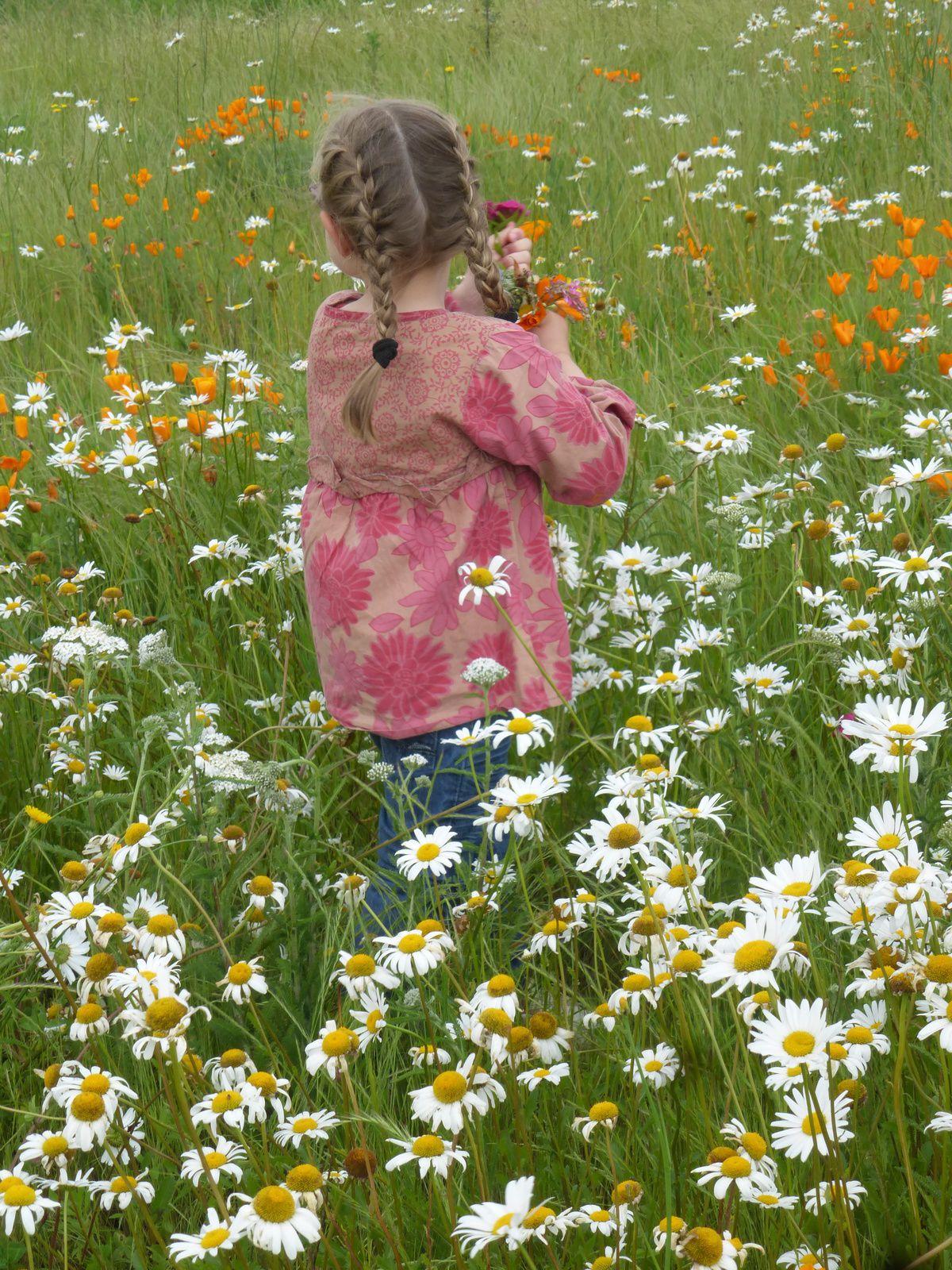 Ma belle des champs et mon joli coquelicot