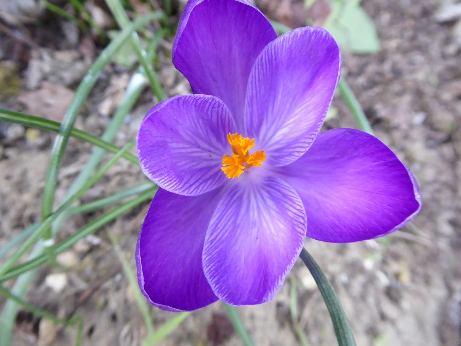 Prémices du printemps!