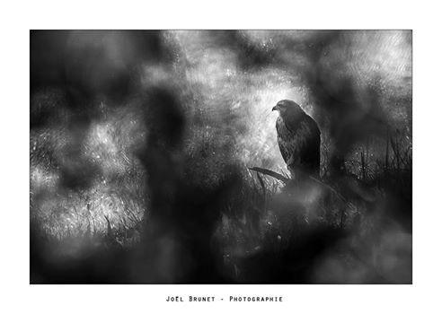 Joël Brunet Photographe
