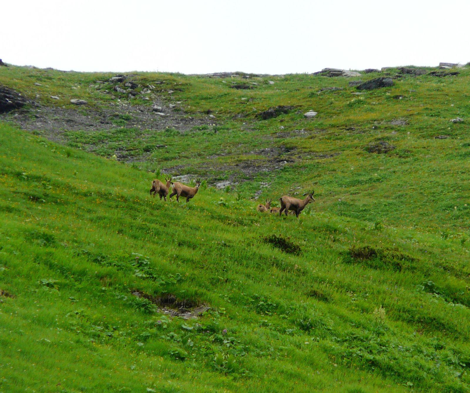 Sixt Fer à Cheval : 7 jours dans la vallée du Giffre
