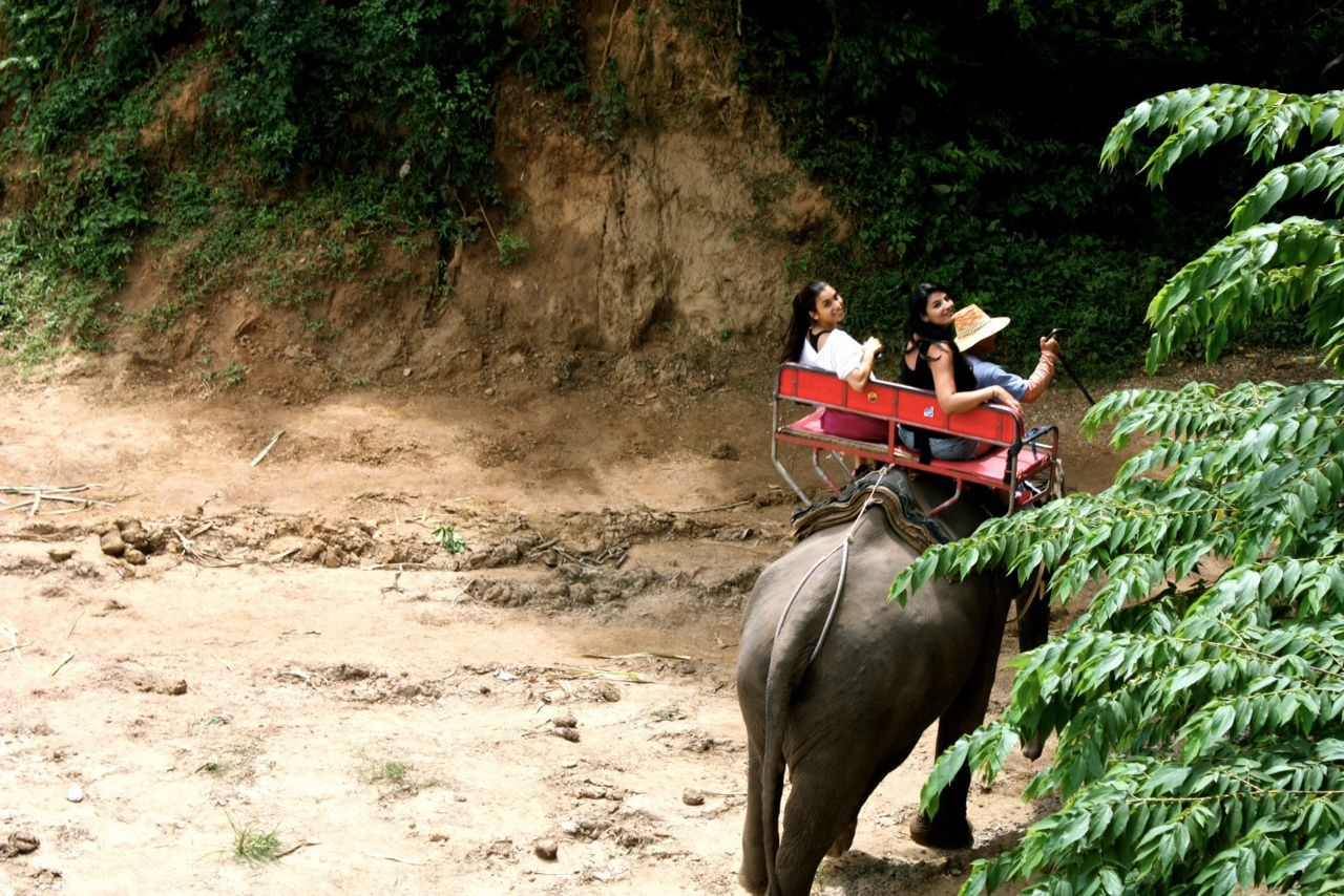 Thailand diary : exotic escape