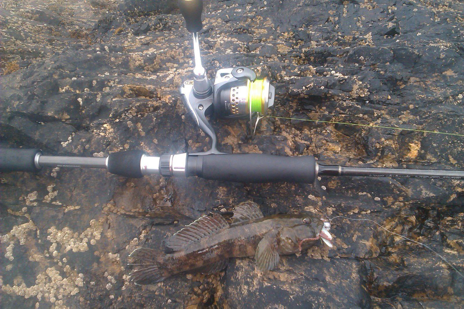 Gobie en rockfishing