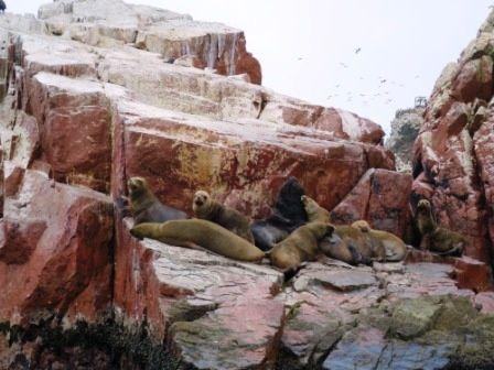 """La réserve marine des îles Ballestas,-  Sur cette face montagneuse """" le Candelabre """"&#x3B;"""