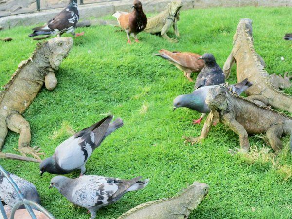 Le parc Bolivar ou se promène de drôle d'animaux préhistorique