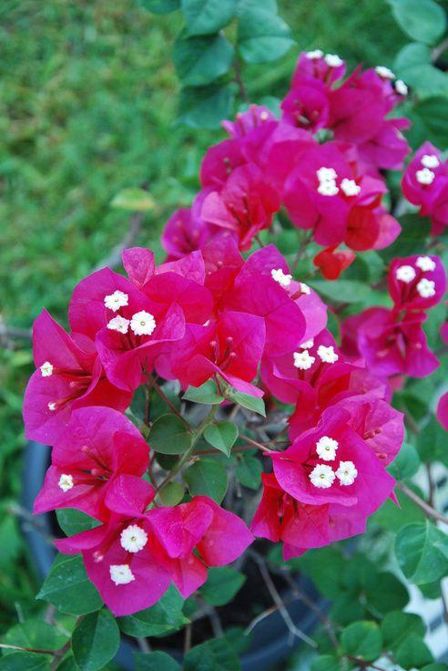 Les fleurs du jardin ...