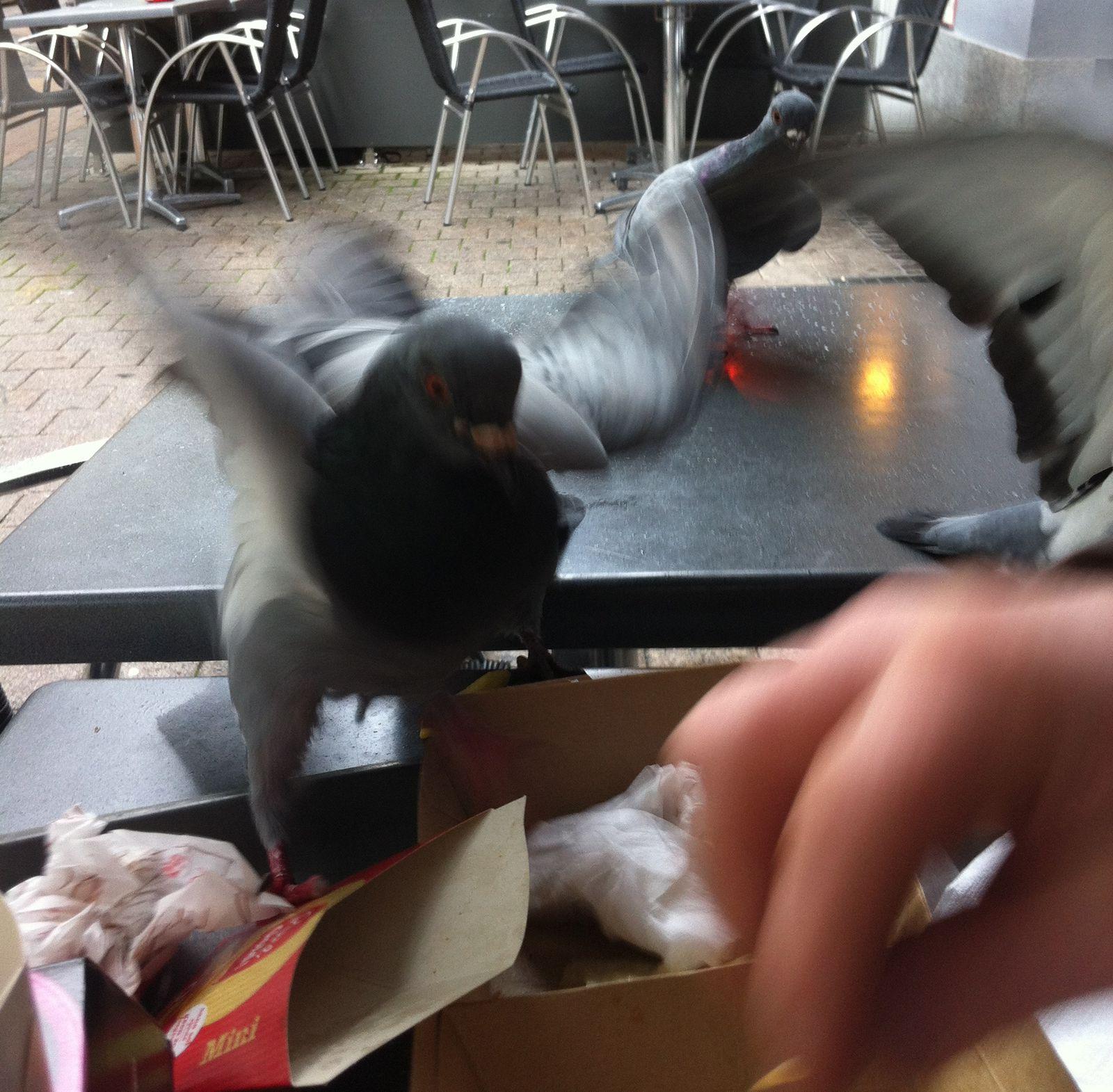 Donner à bouffer aux pigeons...