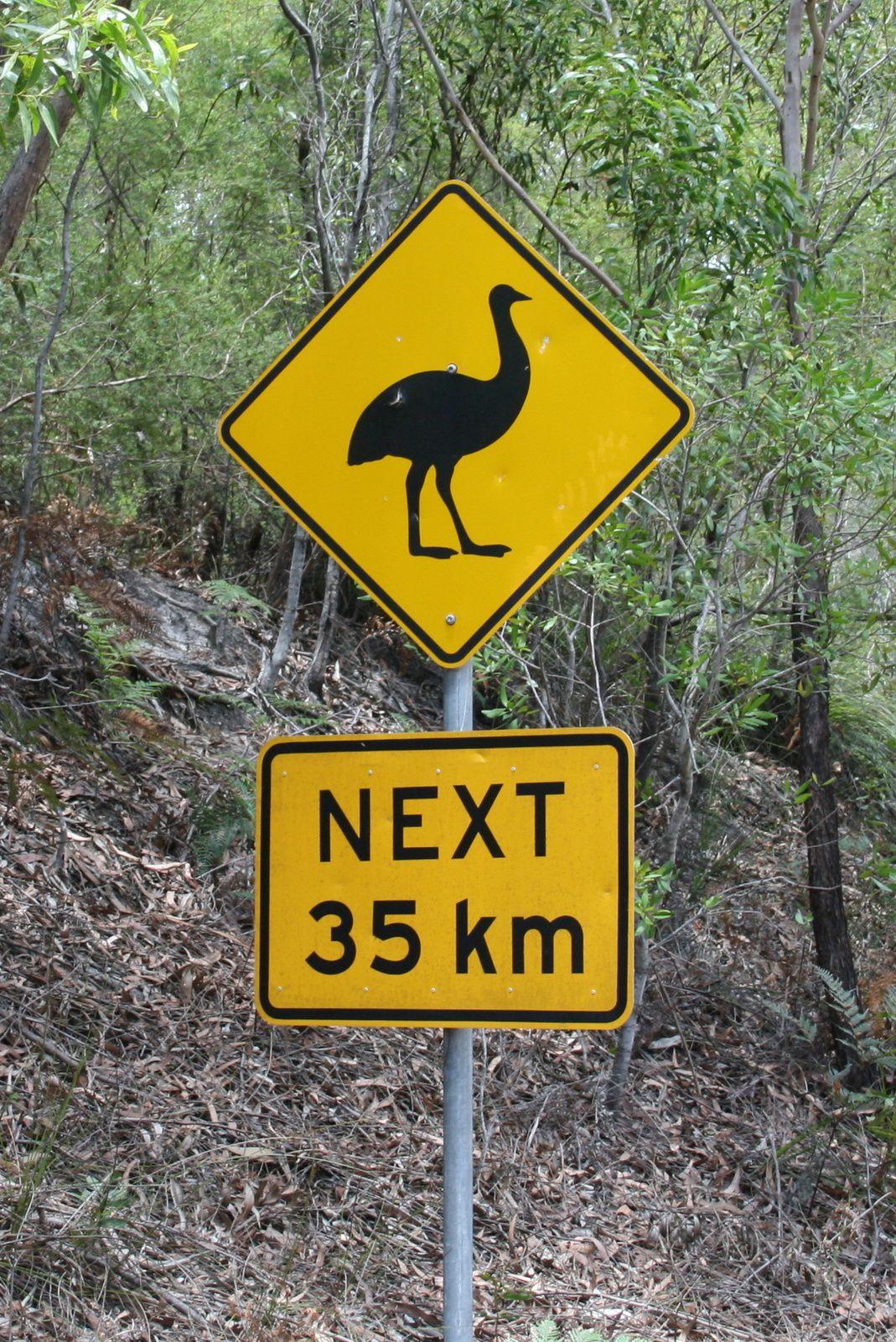 emu autruche australie