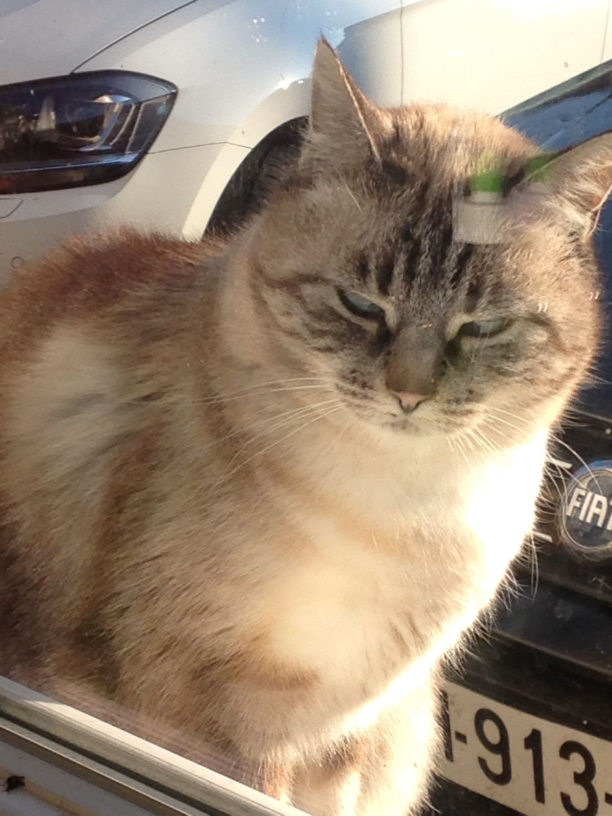 chat qui louche sur charlotteblabla blog*