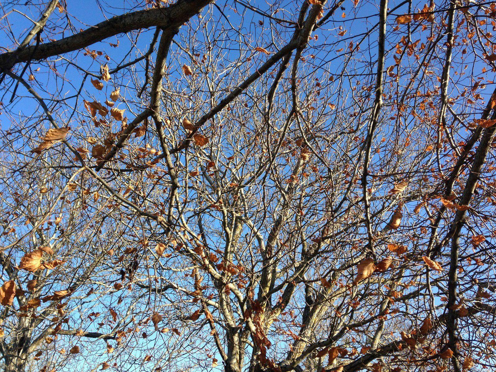 #auvergne, #arbre #charlotteblabla