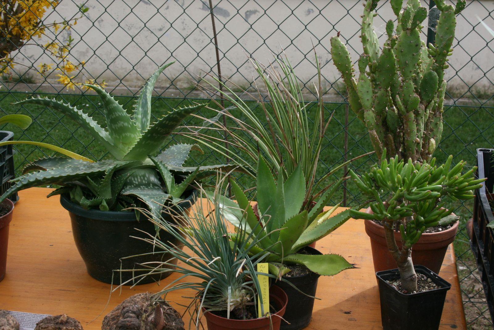 Bourse aux plantes réussie