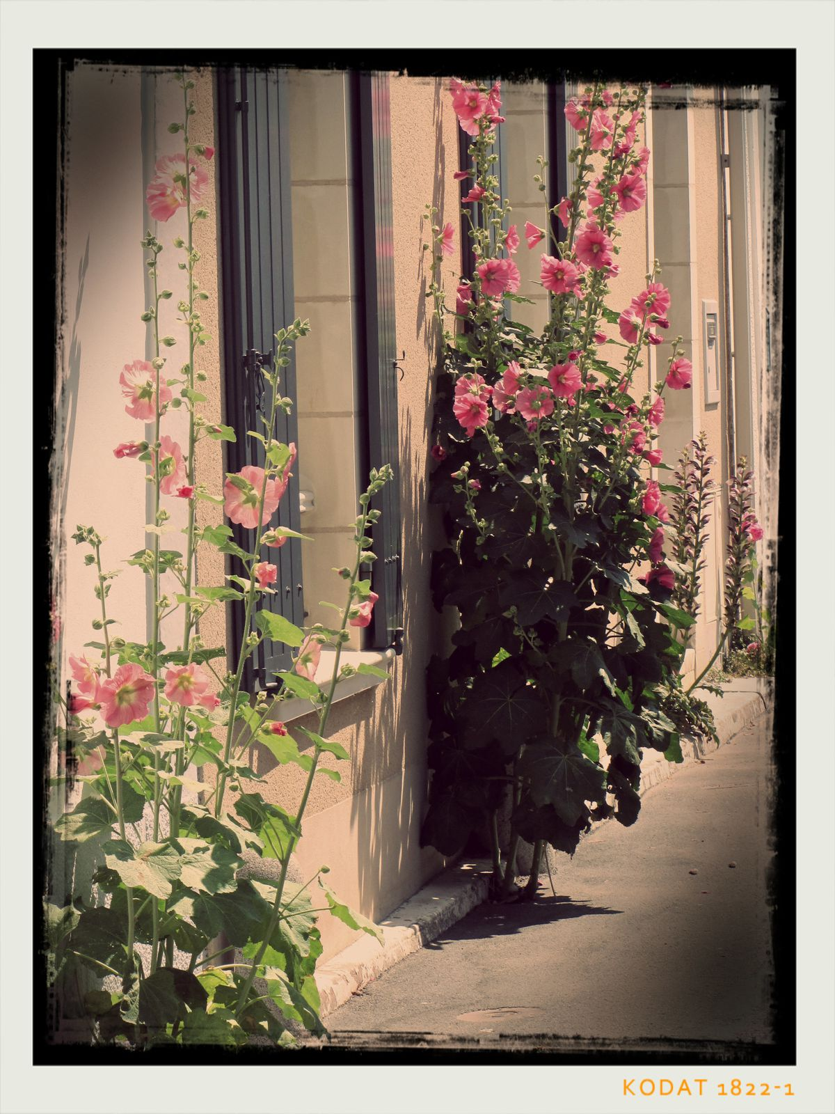 Dans les ruelles du Vieux Saint-Gilles..