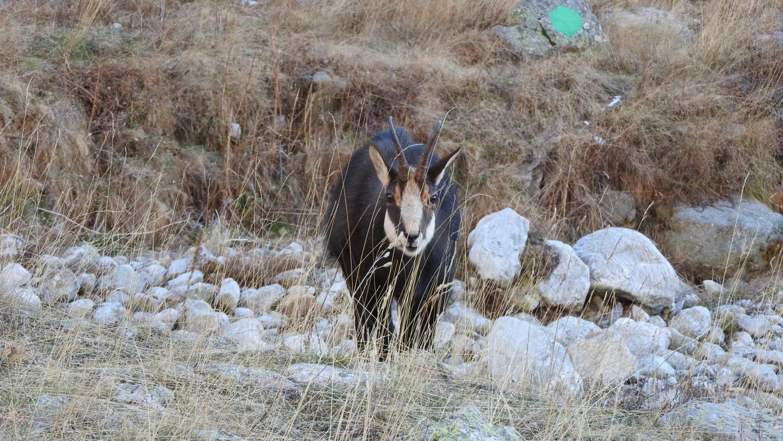 La truite et le frai en montagne décembre 2015