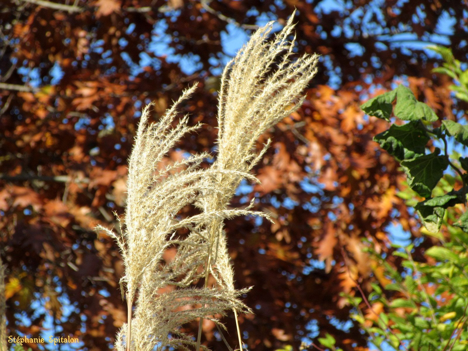 Roseraie en automne 42330 Saint-Galmier