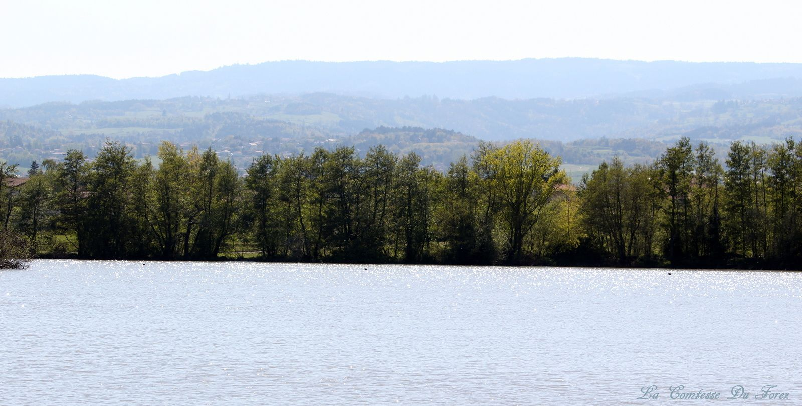 Balade autour de l'étang de Savigneux (42600, Savigneux)