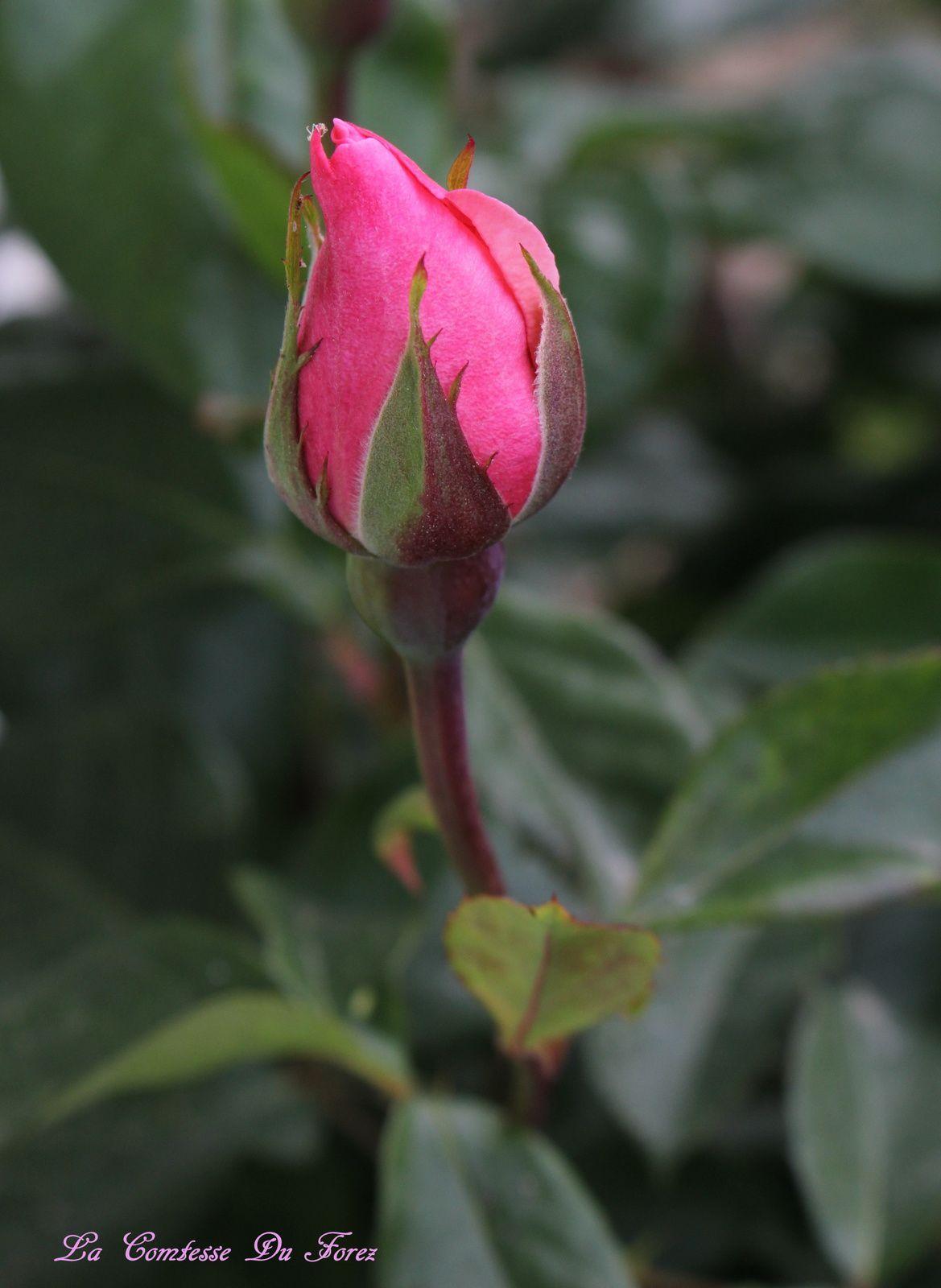 Au Jardin ......de nouvelles pousses colorées