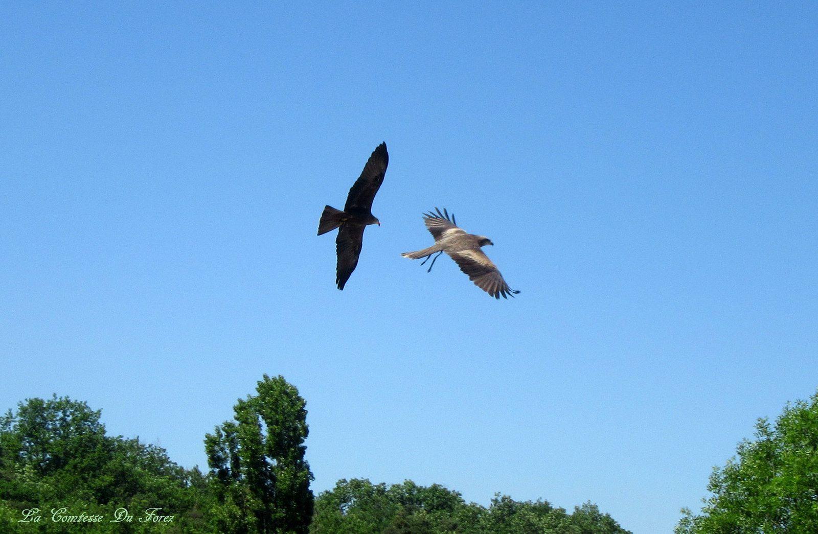 le balai des oiseaux : Magnifique !!!!